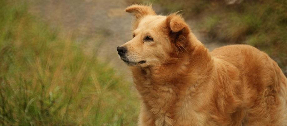 karma dla alergika psa