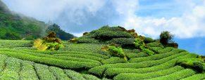Zalety herbaty ajurwedyjskiej